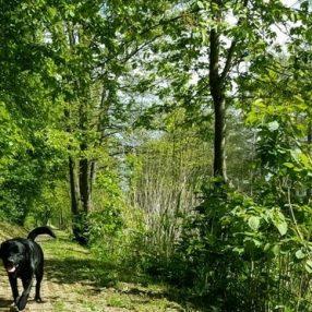 hond, honden, loonse waard, saltshof, aanlijnen, wijchen, d66