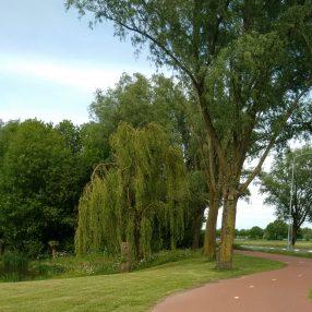 herinrichting renovatie Oosterpark Wijchen